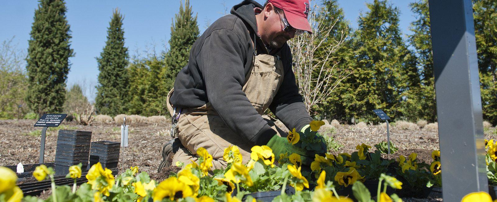 PA State U Arboretum worker planting flowers in springtime.
