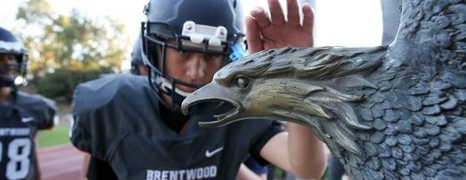 Football player touching eagles' head statue for good luck.
