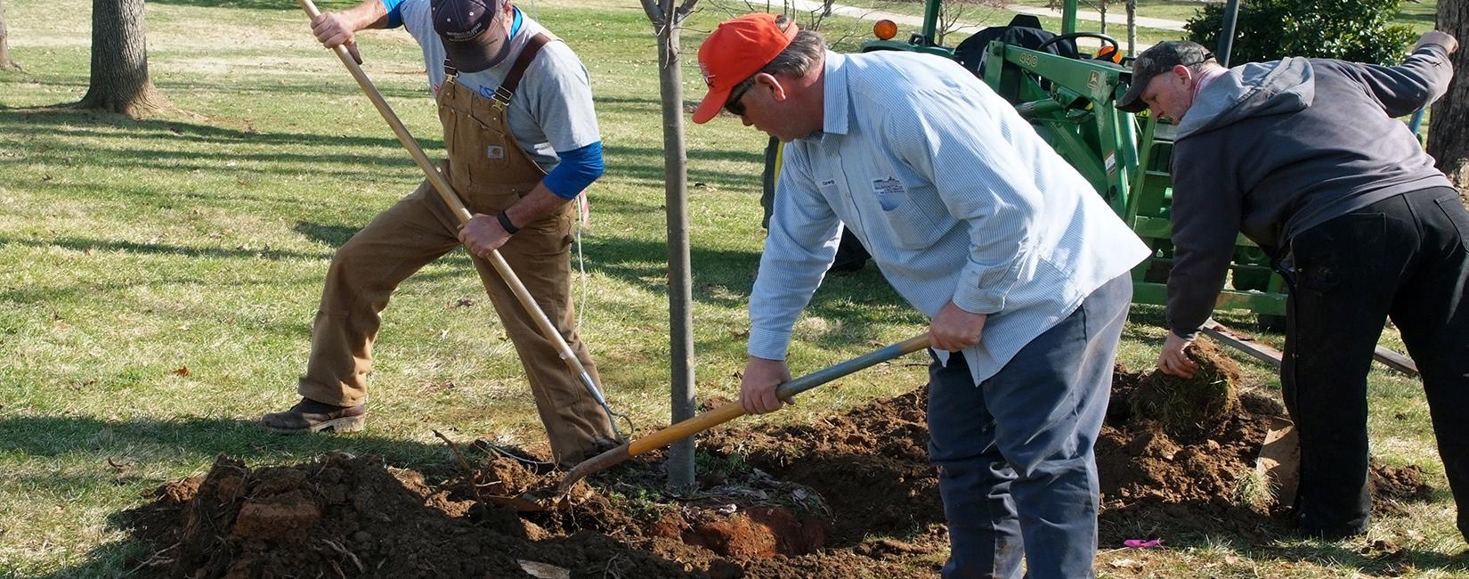 Washington & Lee University Grounds Crew planting trees.