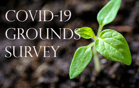 "Graphic of plant coming up from the ground with ""COVID -19 Grounds Survey"""